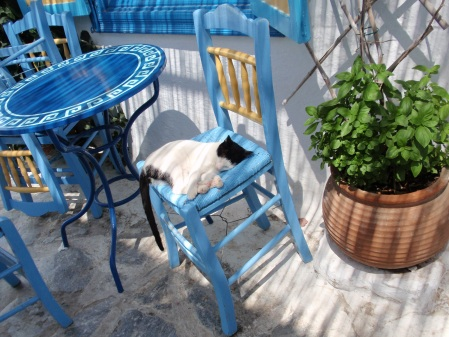 Sleeping Cat Amorgos Cyclades Greece