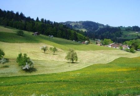 Switzerland Alpine Meadow