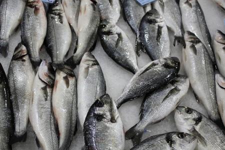 Fish Market pula Istria Croatia