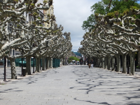 Greek Dancer Trees Burgos